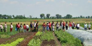 An open farm day tour in Zsambok's Organic Garden, Cargonomia's organic farming partner. Credit - Logan Strenchock